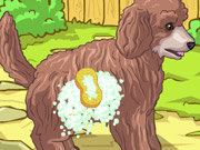 Click to Play Cute Poodle Puppy